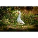 CP stehende Ente